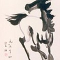 White Horse  by Fereshteh Stoecklein