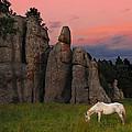 White Horse Grazing by Michael Burg