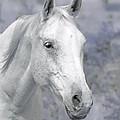 White Horse In Lavender Pasture by Jennie Marie Schell