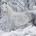 White Horse In The Snow by Bruce Nutting