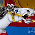 White Horse by Juli Scalzi