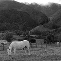 White Horse  by Katalina Fuentes