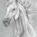 White Horse by Lena Auxier