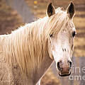 White Horse by Rima Biswas