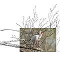 White Ibis by Andrew McInnes