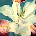 White Iris by Anni Adkins