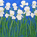 White Irises by J Loren Reedy