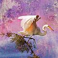 White Lake Swamp Egret by J Larry Walker