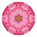 Light Red Zinnia Elegans V Flower Mandala White by David J Bookbinder