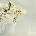 White Lilac In A Cream Jug by Ann Garrett