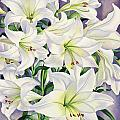 White Lilies by Christopher Ryland