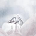 White Lilies  by Lali Kacharava