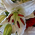 White Lilly by Arlene Carmel