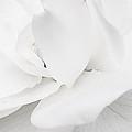 White by Lina Jordaan