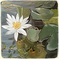 White Lotus by Linda Lopez