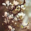 White Magnolias by Jaroslaw Blaminsky