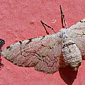 White Moth And Eggs by Camilla Fuchs