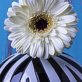 White Mum In Striped Vase by Garry Gay