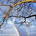 White Oak And Double Rainbow by Thomas R Fletcher