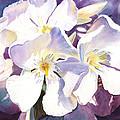 White Oleander by Irina Sztukowski