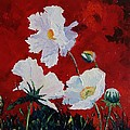 White On Red Poppies by Valerie Curtiss