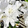 White On White by Elvis Vaughn