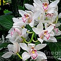 White Orchid In Full Bloom by Lena Photo Art