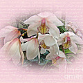 White Orchids by Mother Nature