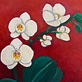 White Orchids by Victoria Lakes