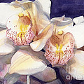 White Orchids Watercolor by Greta Corens