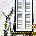 White Painted Shutter by Marilyn Hunt