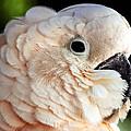 White Parrot by Ingrid Smith-Johnsen
