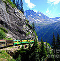 White Pass And Yukon Route Railway In Canada by Catherine Sherman
