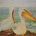 White Pelicans by Hannah Boynton