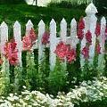 White Picket Fence by Carol Sullivan