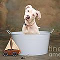 White Pitbull Puppy Portrait by James BO  Insogna