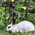 White Rabbit In Costa Rica by Peggy Collins