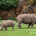 White Rhino 11 by Arterra Picture Library