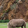 White Rhino 13 by Arterra Picture Library