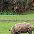White Rhino 14 by Arterra Picture Library
