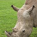 White Rhino 15 by Arterra Picture Library
