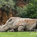 White Rhino 16 by Arterra Picture Library