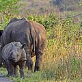 White Rhino  by Gerhardt Marais