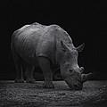 White Rhinocero by TouTouke A Y