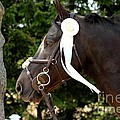 White Ribbon by Janice Byer