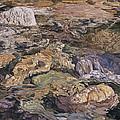 White Rock by Stephen Dittberner