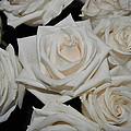 White Rose 1 by Elena Ferrer