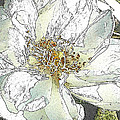 White Rose Abstract by Jeanne A Martin
