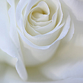 White Rose Floral Whispers by Jennie Marie Schell