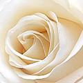White Rose Heart by Gill Billington